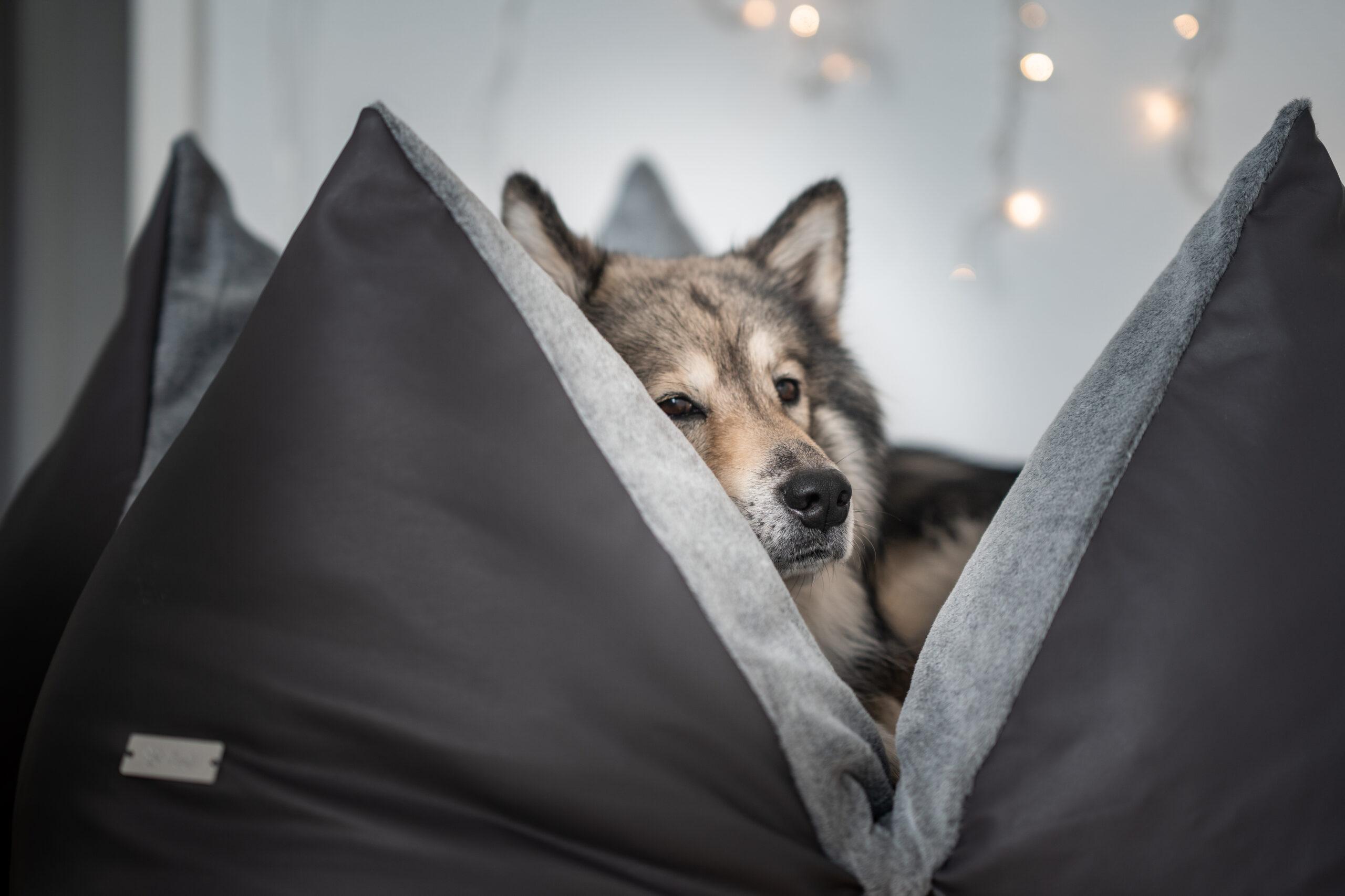Alleine bleiben im gemütlichen FLUM Hundekissen