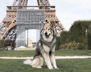 Paris mit Hund vor dem Eiffelturm