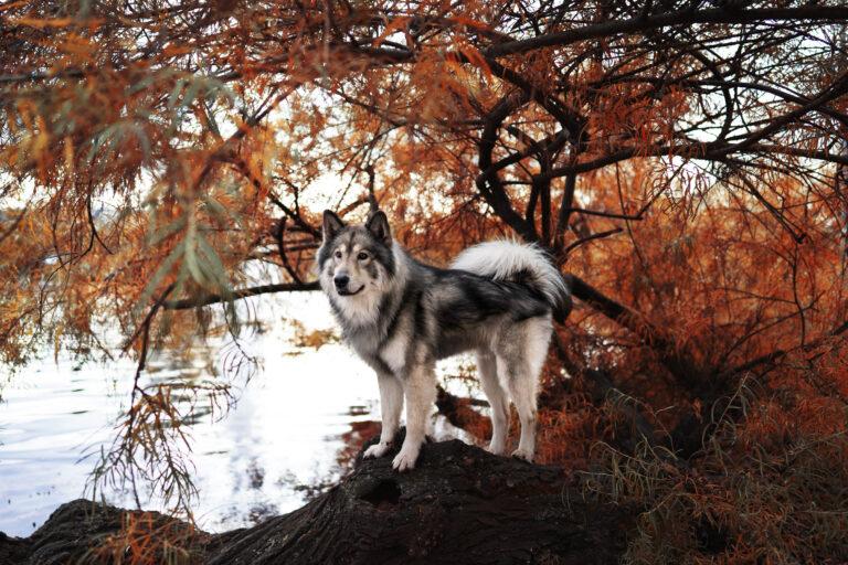 Reisen im Wohnmobil mit Hund